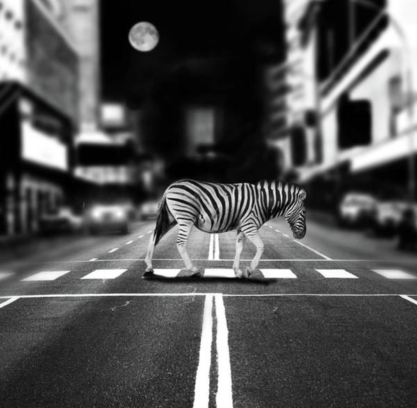 Out Of Context Photograph - Zebra Crossing by By Sigi Kolbe