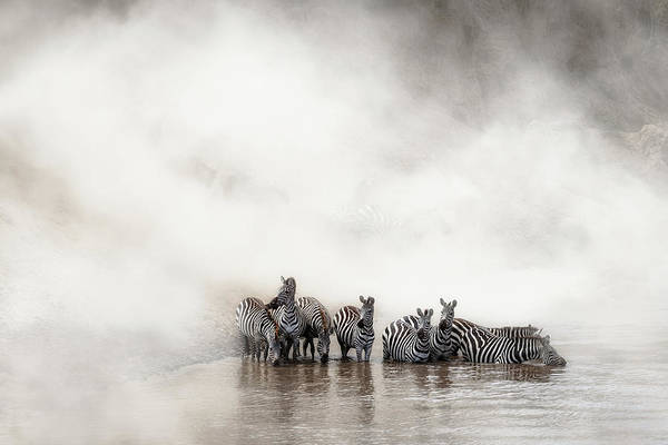 Wall Art - Photograph - Migration In The Mara by Susan Schmitz