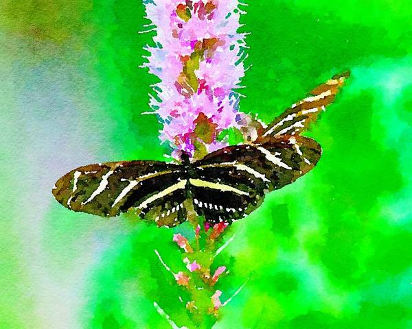 Mixed Media - Zebra Longwing Butterfly by Susan Rydberg