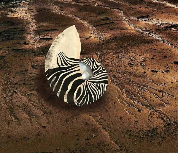 Mixed Media - Zebra Nautilus Shell On The Sand by Joan Stratton