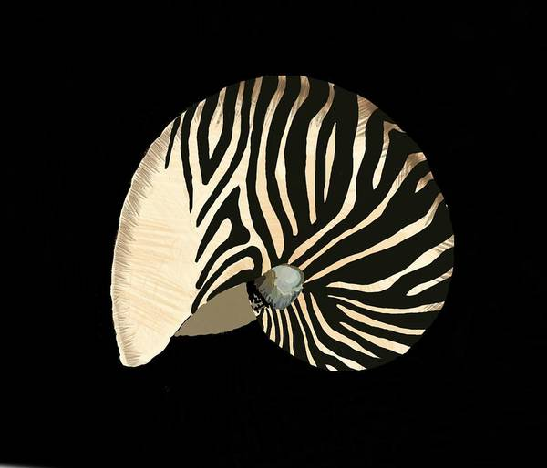 Mixed Media - Zebra Pattern Nautilus Shells4 by Joan Stratton