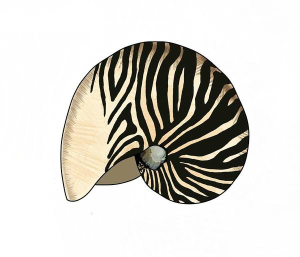 Mixed Media - Zebra Pattern Nautilus Shells5 by Joan Stratton