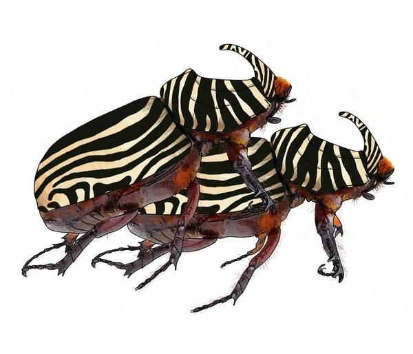 Digital Art - Zebra Pattern Rhinoceros Beetle 2 by Joan Stratton