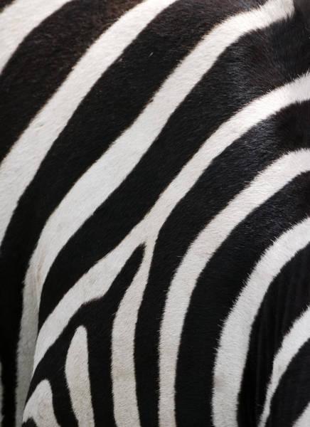 Art Prints Photograph - Zebra Stripes by Freder