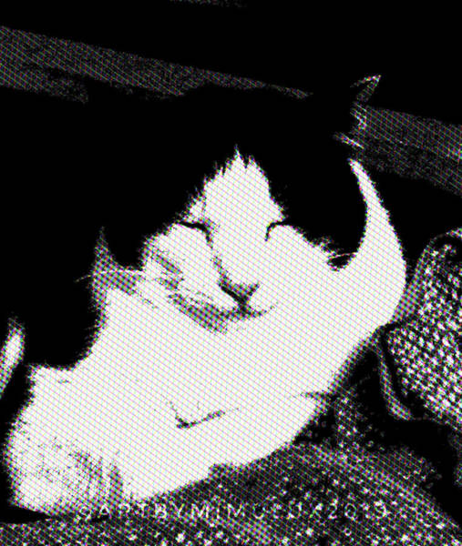 Photograph - Zen Cat by Mimulux patricia No