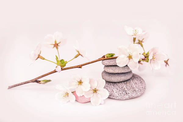Wall Art - Photograph - Zen Cherry Blossom by Delphimages Photo Creations