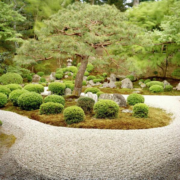 Vertical Garden Photograph - Zen Garden by Caroline De Vries