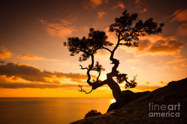 Beauty In Nature Wall Art - Photograph - Zen Is A Tree On The Cliff Rocks And by Yarygin