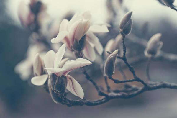 Wall Art - Photograph - Zen Magnolia Blossom Boho Style by Jenny Rainbow