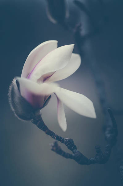Wall Art - Photograph - Zen Magnolia Flower Boho Style 1 by Jenny Rainbow