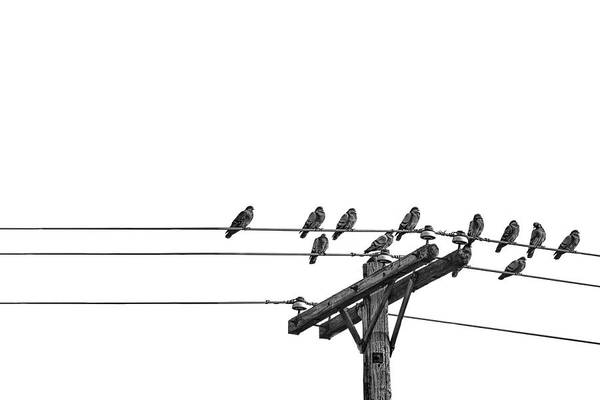 Photograph - Zen Photograph Of Pigeons On A Wire by Randall Nyhof