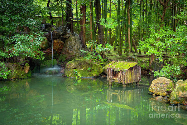 Photograph - Zen Pond by Peng Shi