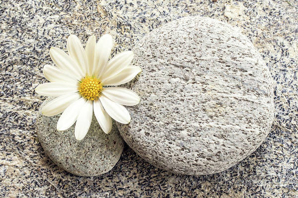 Focus Wall Art - Photograph - Zen Stone And Daisy by Delphimages Photo Creations