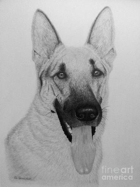German Shepherd Drawing - Zeus 2 by George Sonner