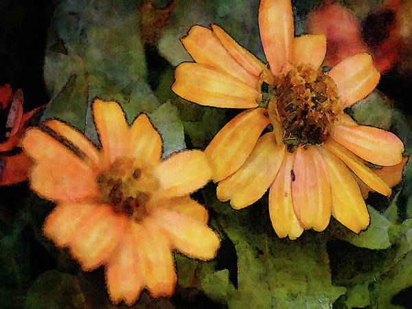 Photograph - Zinnia Two 6997 Idp_2 by Steven Ward