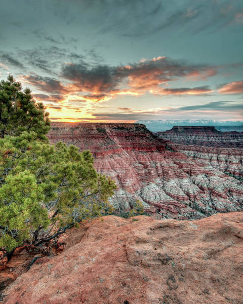 Photograph - Zion Beauty by Laura Hedien