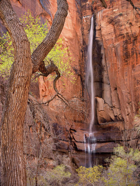 Photograph - Zion Canyon by Leland D Howard
