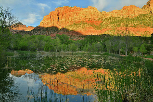 Photograph - Zion Canyon Pond Reflection by Ray Mathis