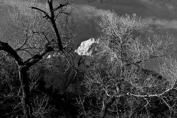 Photograph - Zion Canyon The Grotto Cottonwoods by Ed  Riche