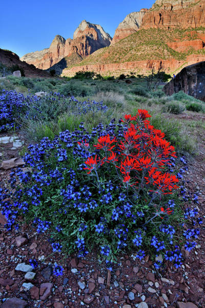 Photograph - Zion Canyon Wildflowers by Ray Mathis