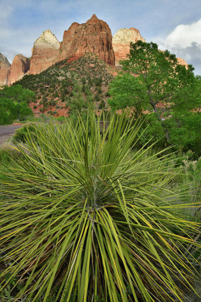 Photograph - Zion National Park Yucca by Ray Mathis