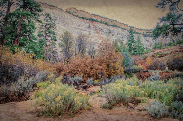 Photograph - Zions Garden by Jim Cook