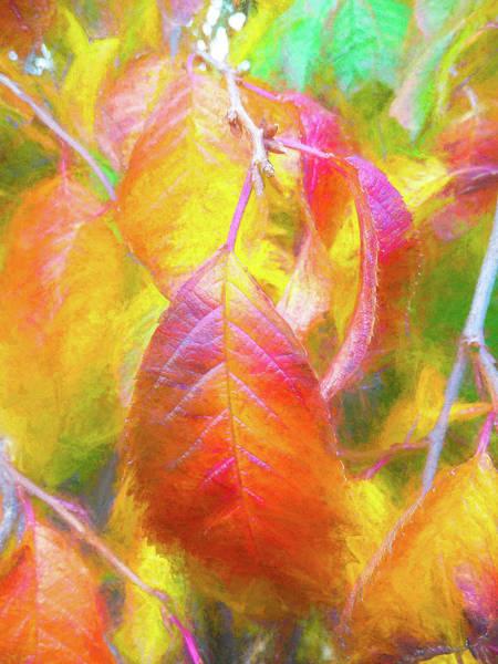 Steve Taylor - The Autumnal Cherry Tree