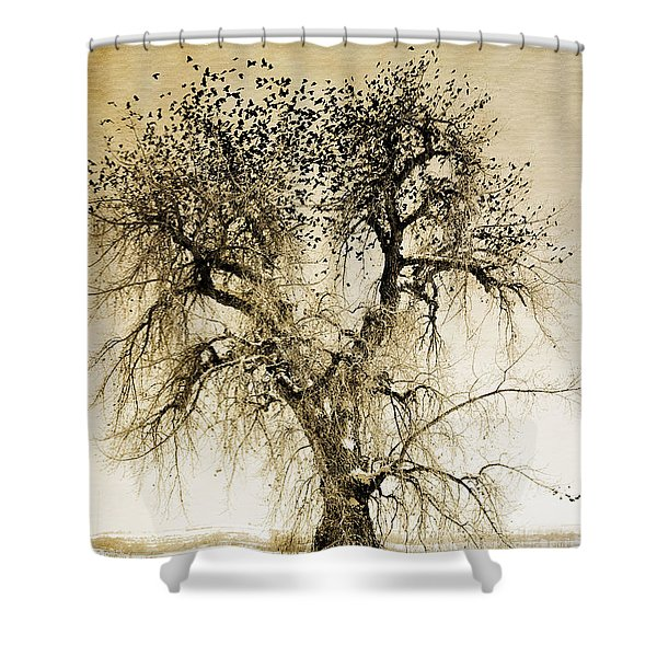 Bird Tree Fine Art  Mono Tone And Textured Shower Curtain