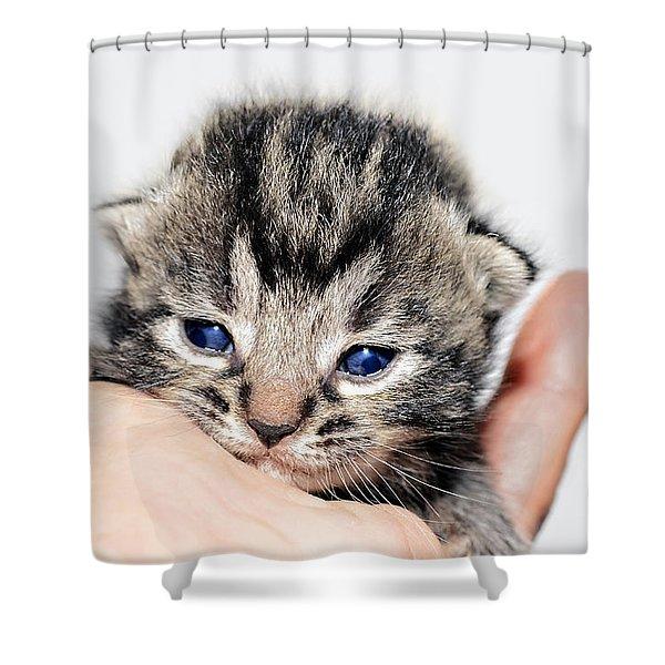 Kitten In A Hand Shower Curtain