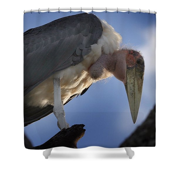 Maribou Stork Shower Curtain