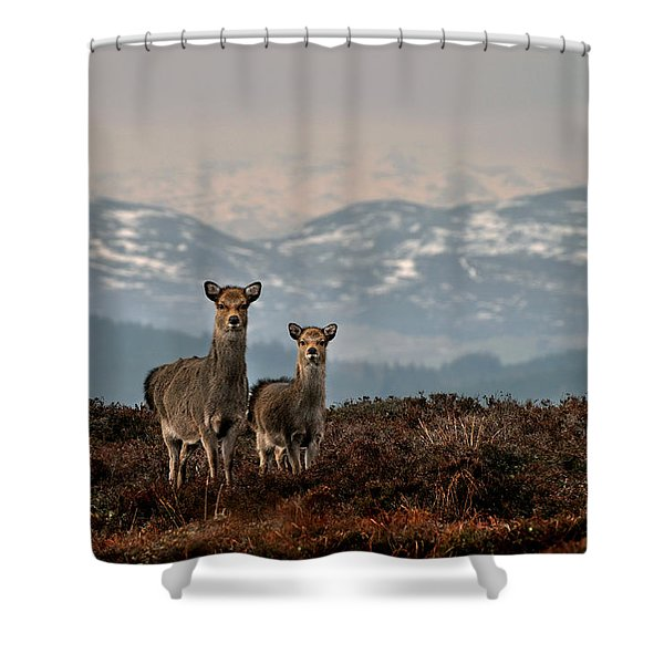 Sika Deer Shower Curtain