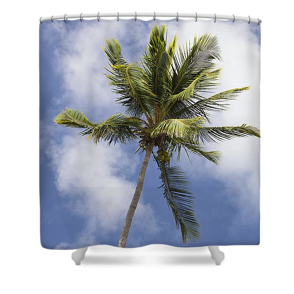 Shower Curtain featuring the photograph  Sky And Palm Tree With Coconuts by Bryan Mullennix