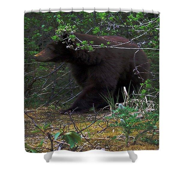 03162015 Black Bear Alaska Shower Curtain