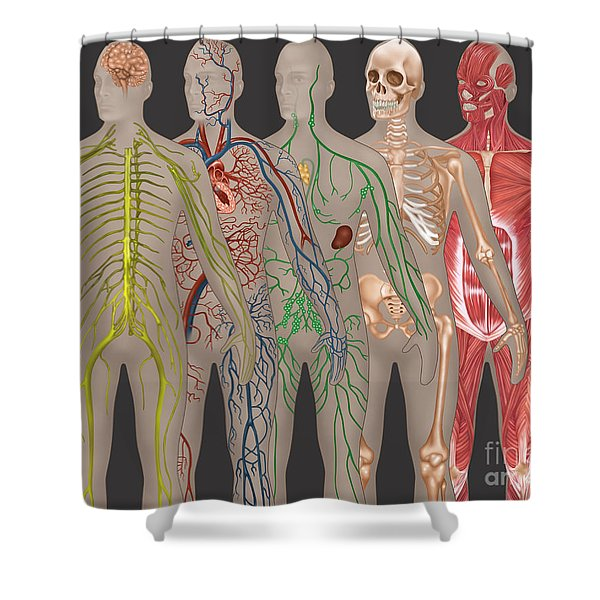 5 Body Systems In Male Anatomy Shower Curtain