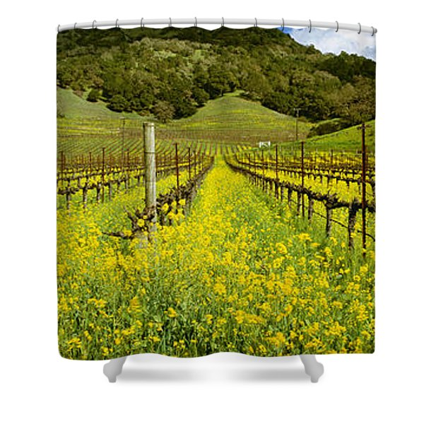 Agriculture - Wine Grape Vineyard Shower Curtain