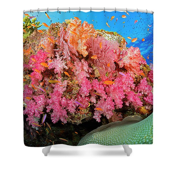 Alconarian And Gorgonian Coral Shower Curtain