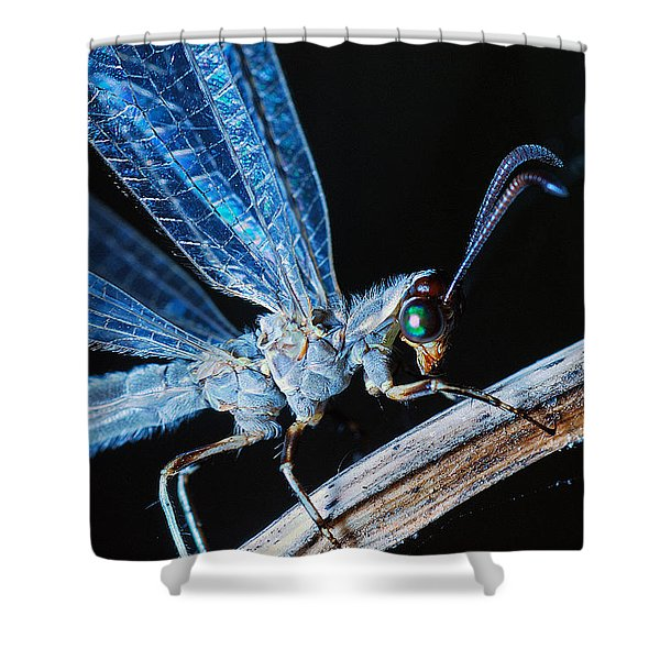 Antlion Shower Curtain