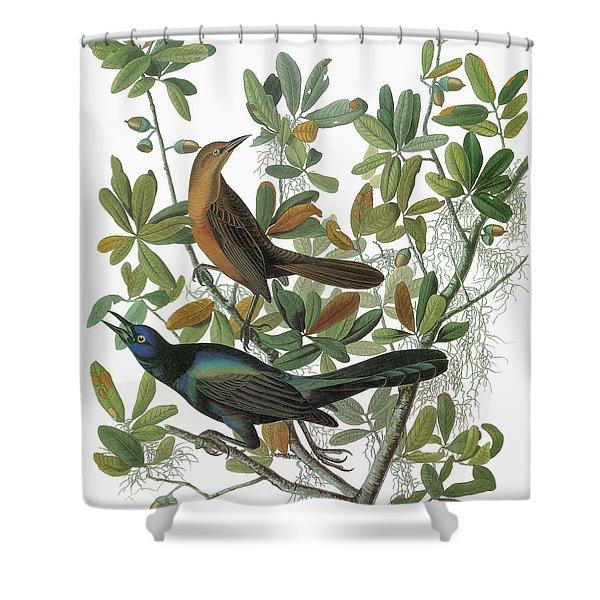 Audubon Grackle Shower Curtain