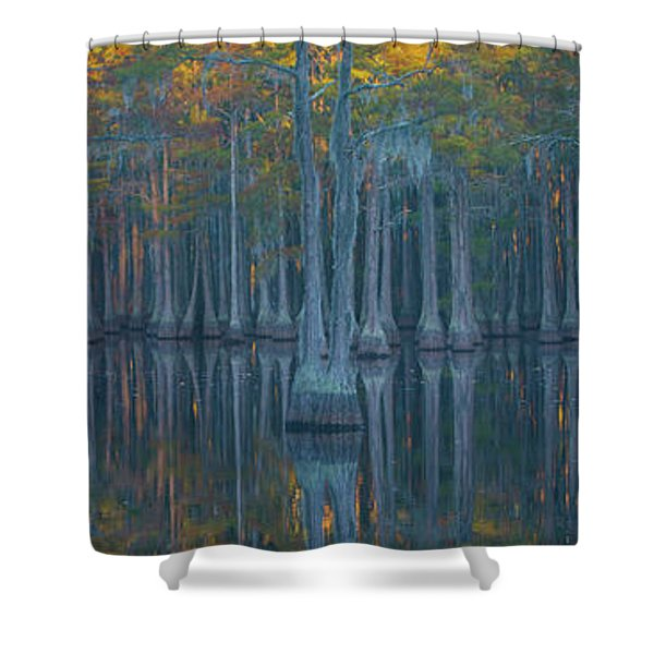 Bald Cypress Trees In A Forest, George Shower Curtain