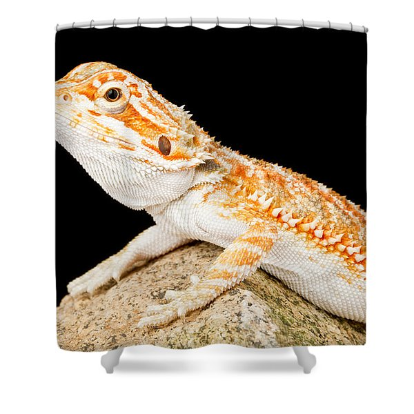 Bearded Dragon Pogona Sp. On Rock Shower Curtain