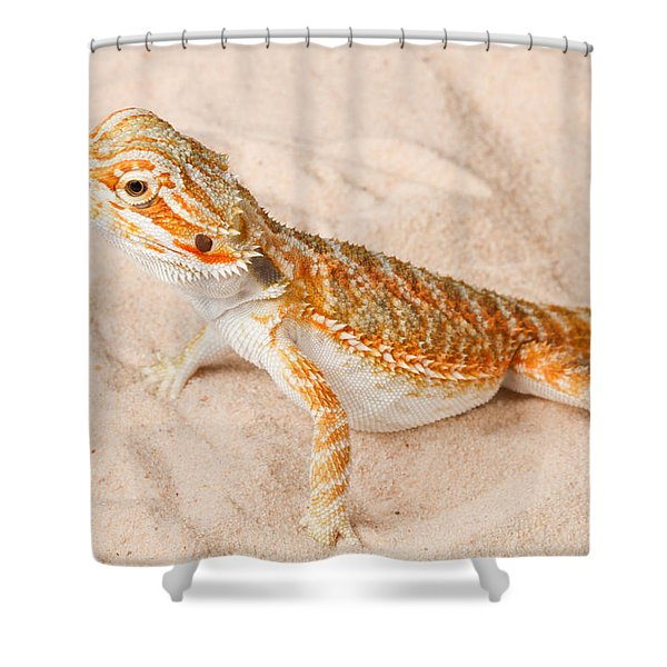 Bearded Dragon Pogona Sp. On Sand Shower Curtain