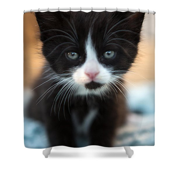 Black And White Kitten Shower Curtain