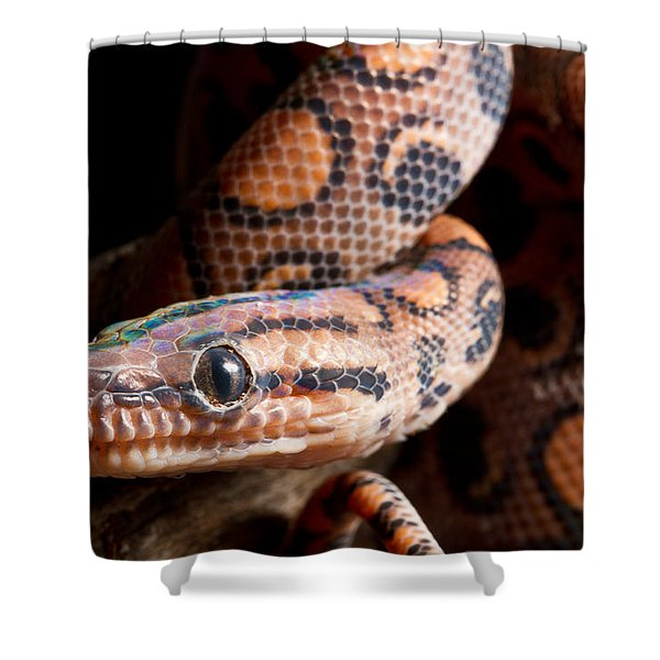 Brazilian Rainbow Boa On Branch Shower Curtain