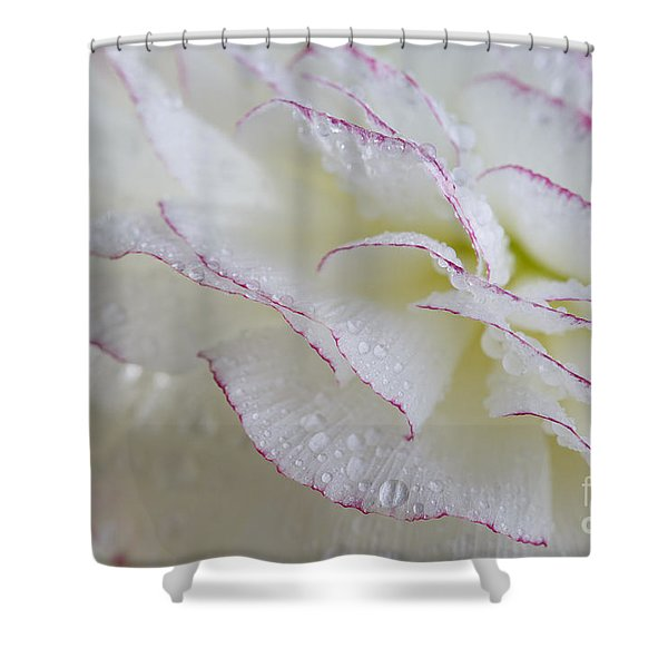 Buttercup Flower With Dew Shower Curtain