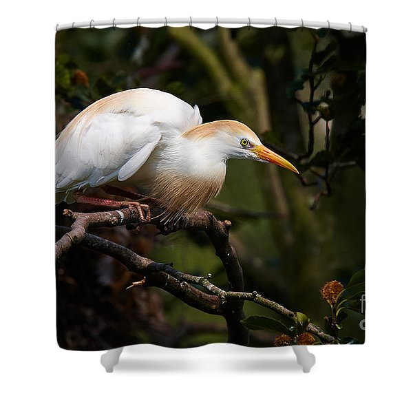 Cattle Egret In A Tree Shower Curtain