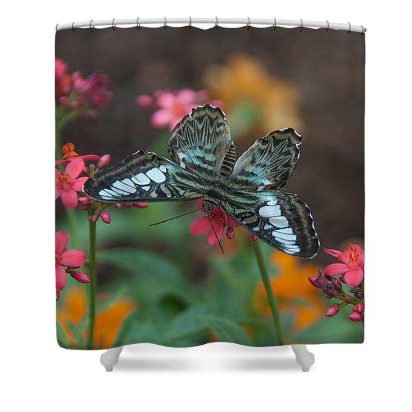 Clipper Butterfly 6150-052513-1cr Shower Curtain