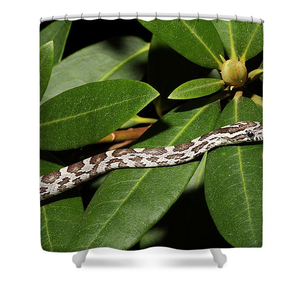 Corn Snake Pantherophis Guttatus Shower Curtain