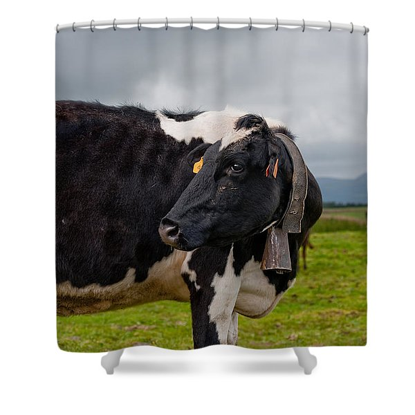Cow Wearing Cowbell  Shower Curtain