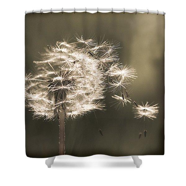 Dandelion Shower Curtain