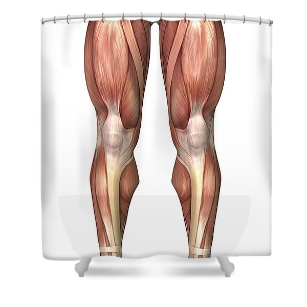 Diagram Illustrating Muscle Groups Shower Curtain